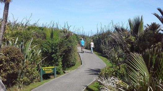 New Zealand coastal walking track