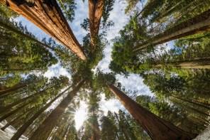 Risultati immagini per sequoia national park