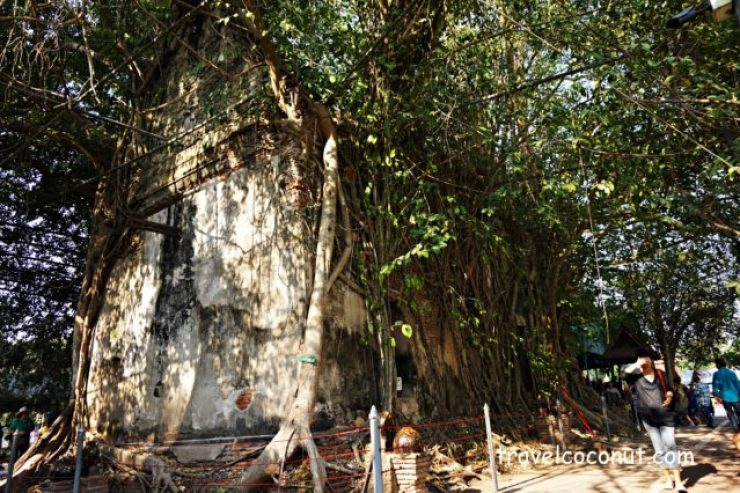 The Temple That Covers By The Roots Of The Tree at Amphawa Floating Market