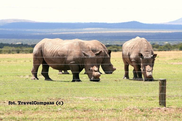 Nosorożec Biały, Ol Pejata Conservancy