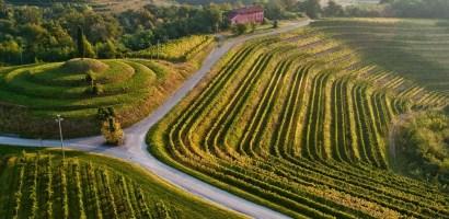 Międzynarodowa Konferencja Turystyki Winiarskiej 2020 odbędzie się we Friuli Venezia Giulia