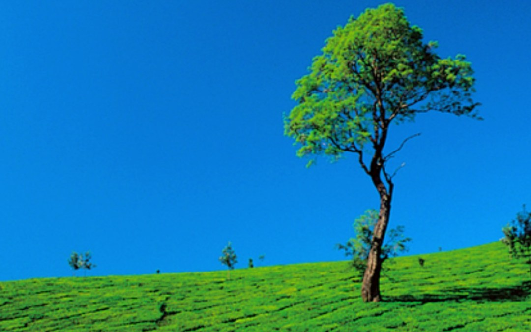 Top 5 Hill Stations in Kerala