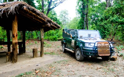 "Why ""Taj Safaris"" Is The Best Choice When It Comes To Experiencing National Parks In India?"