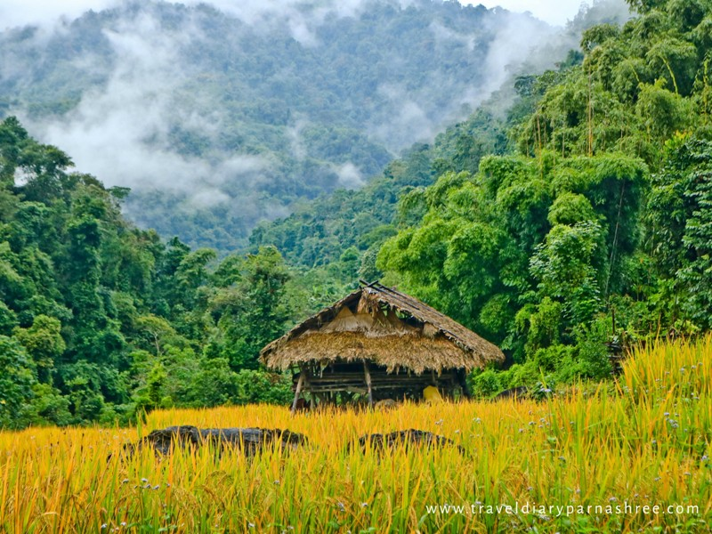 A lonely hut in the paddy field in Basar, Arunachal Pradesh