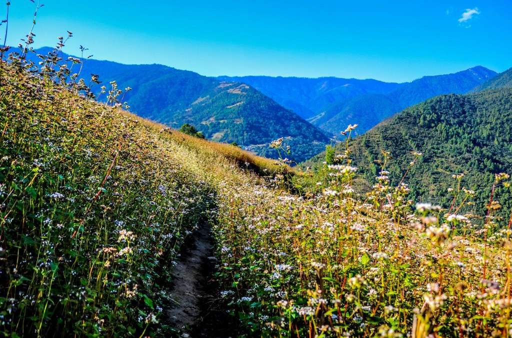 Dirang Valley Trek in Arunachal Pradesh: Everything You Wanted to Know
