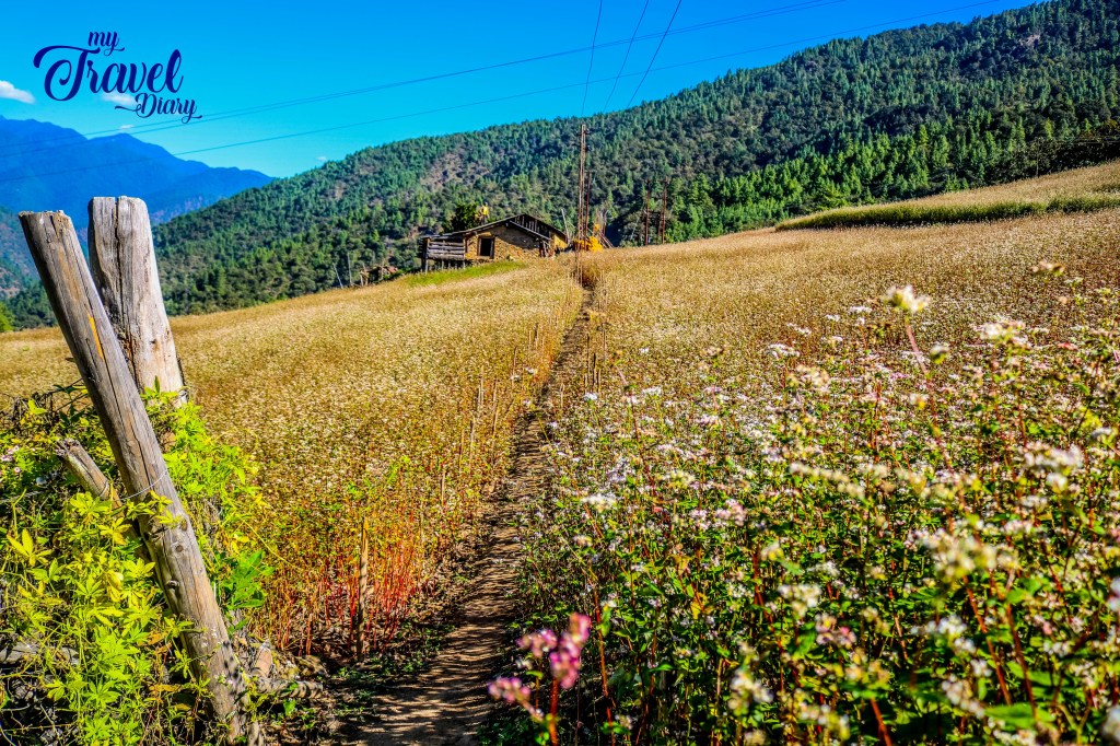 The eye-arresting scenery up in the hills in Dirang valley