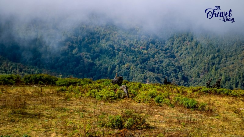 Cloud-laden forested area around Mandala Top