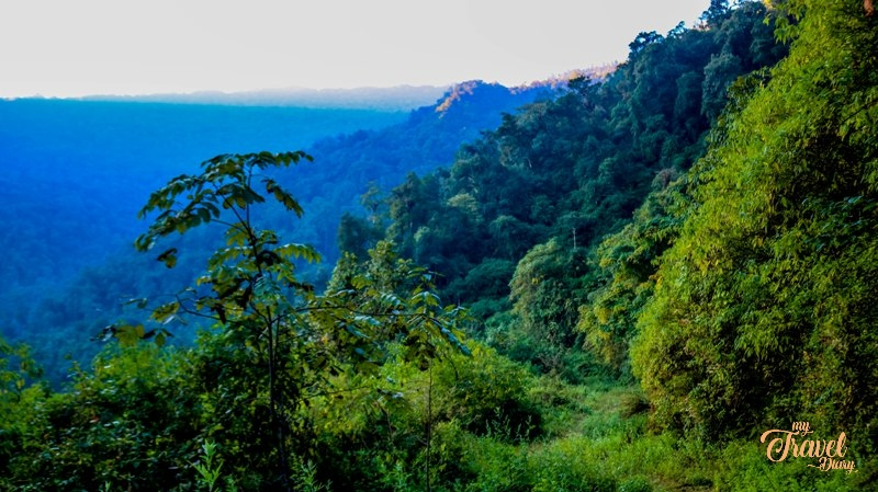 Early morning view of the forest in Dirang Valley