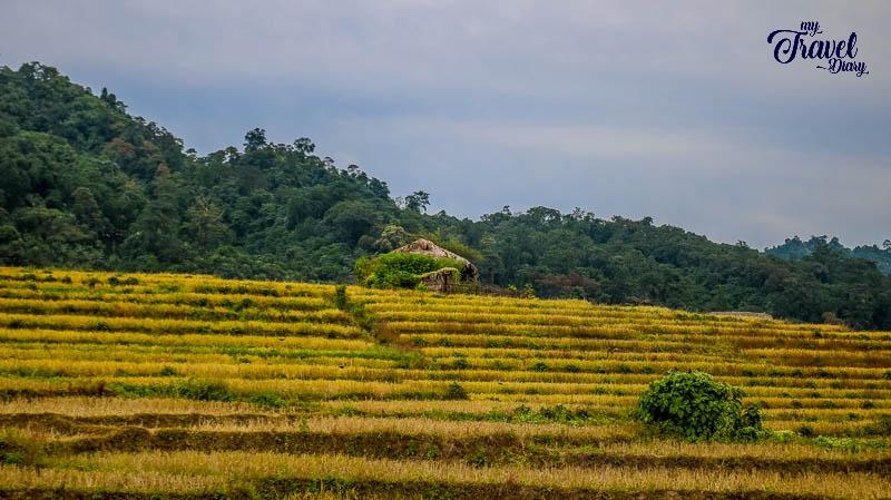 Step farming in Ledum Village_Arunachal Pradesh