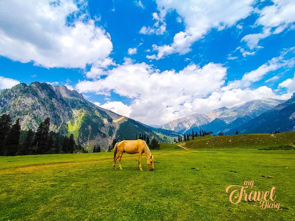 Horse grazing in the grassland of  Sonamarg, Kashmir
