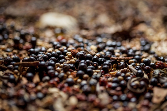 Juniper berries for Caorunn Scottish gin