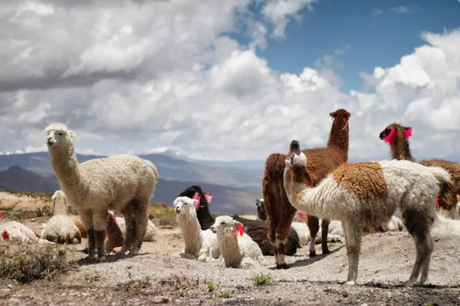 Where to go in Peru Besides Machu Picchu