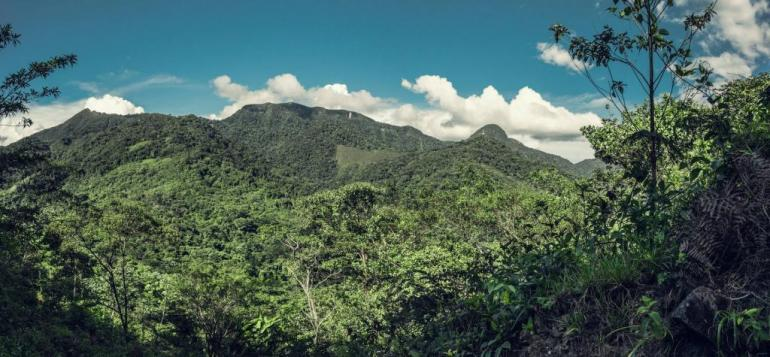 The Jungle of Peru