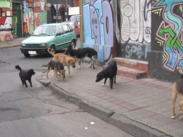 Dogs all over Chile