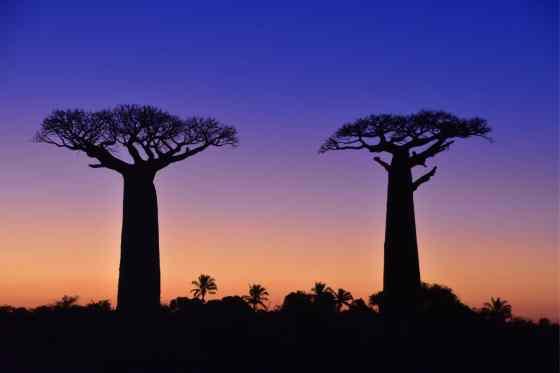 猴麵包樹的日落