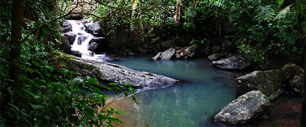 Just a normal scene in the stunning El Yunque. Photo by InspiredVision/Flickr.