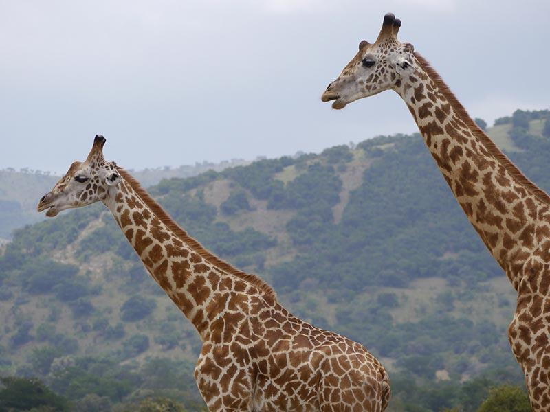 Rwanda tour destinations - Experience Rwanda Wildlife Tour