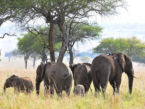 15 DAY HIGHLIGHTS OF UGANDA WILDLIFE SAFARI HOLIDAY