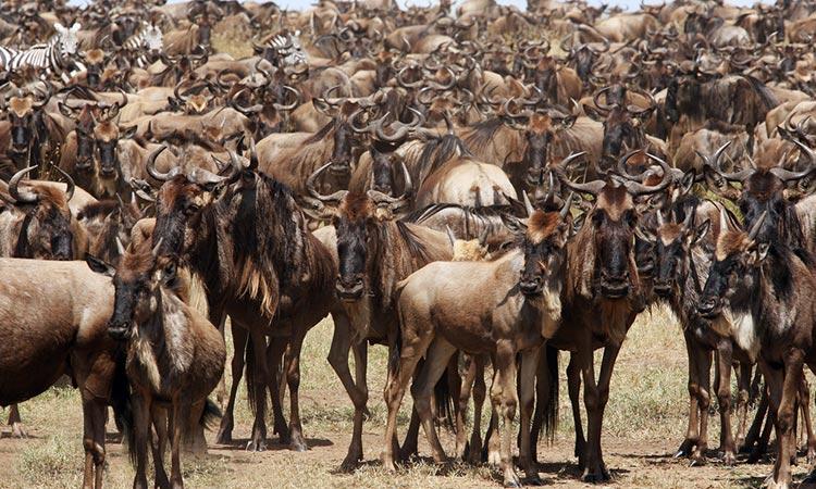 Masai Mara safari Kenya Wildlife Tour