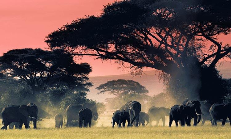 Tsavo National Park, Kenya Safaris