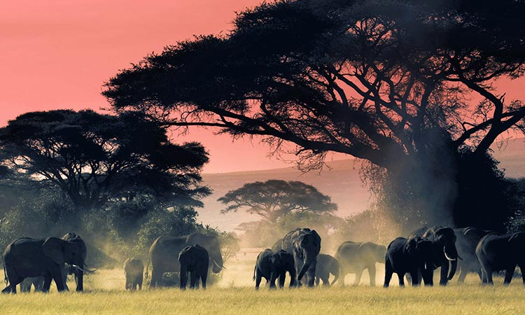 Amboseli, Tsavo Wildife Tour