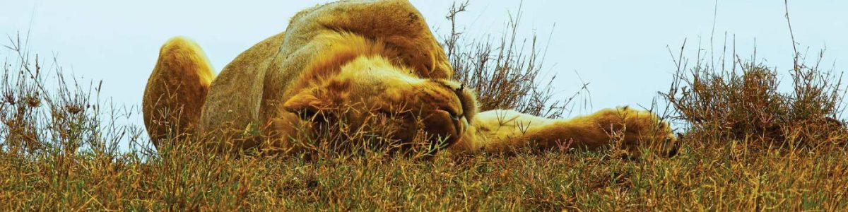 Serengeti National Park - Tanzania Wildlife Safaris Tour