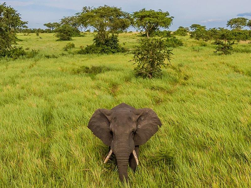 Uganda Wildlife Safari & Chimpanzee Tour