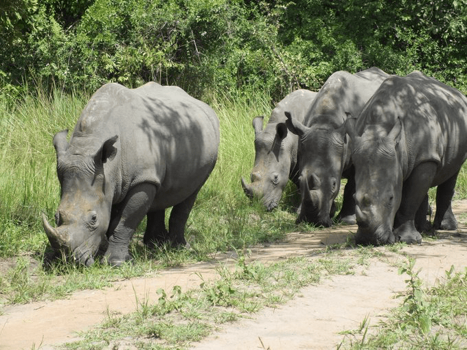 Ziwa Rhino Sanctuary - Uganda excursions