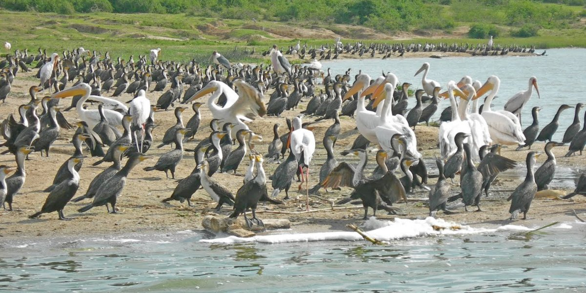 Bird Sightings on Kazinga Channel