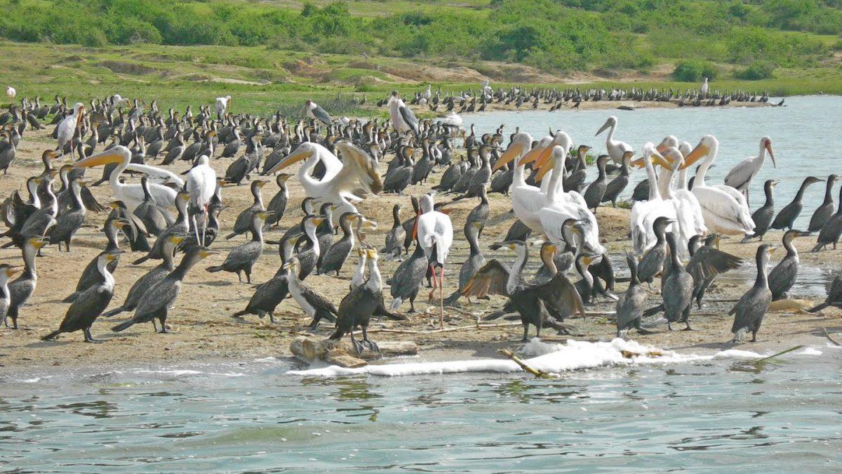 Bird Sightings on Kazinga Channel