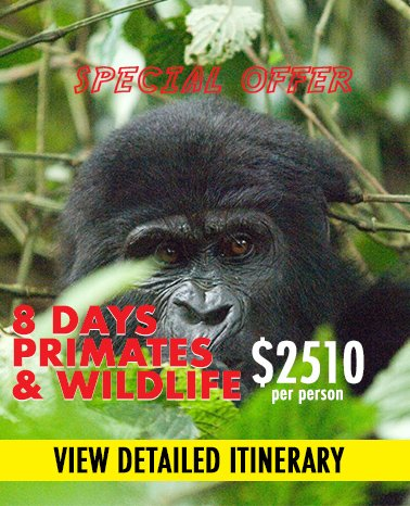 special offer safari package - 8 days uganda primates and wildlife safari