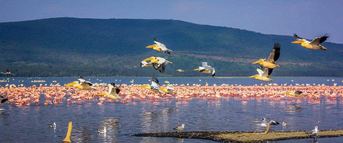 Birding Tour in Kenya