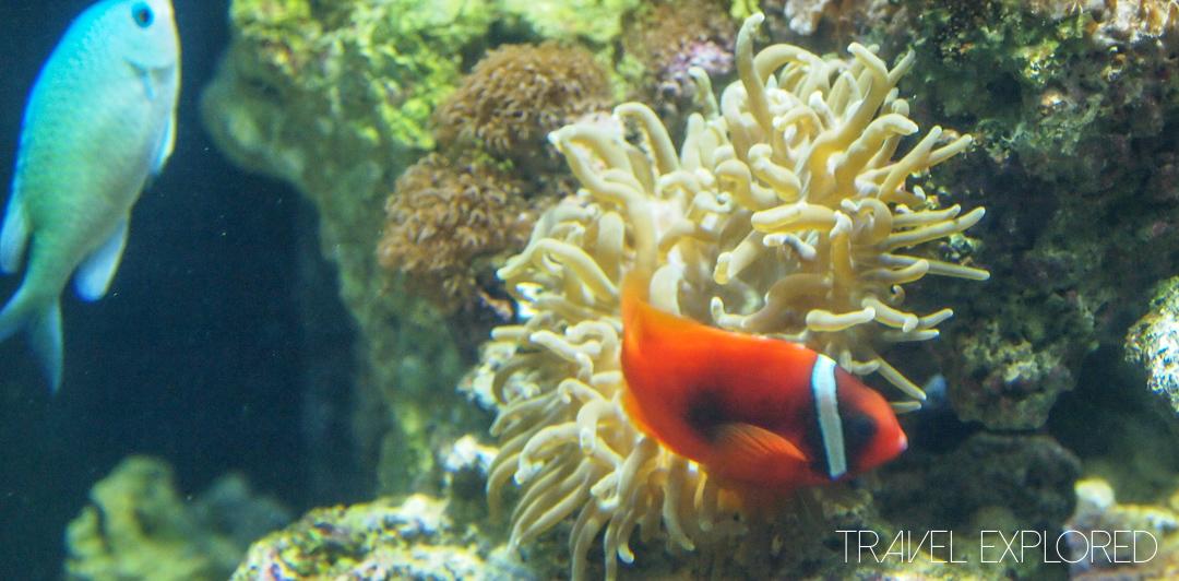San Francisco - Aquarium Tropical Fish