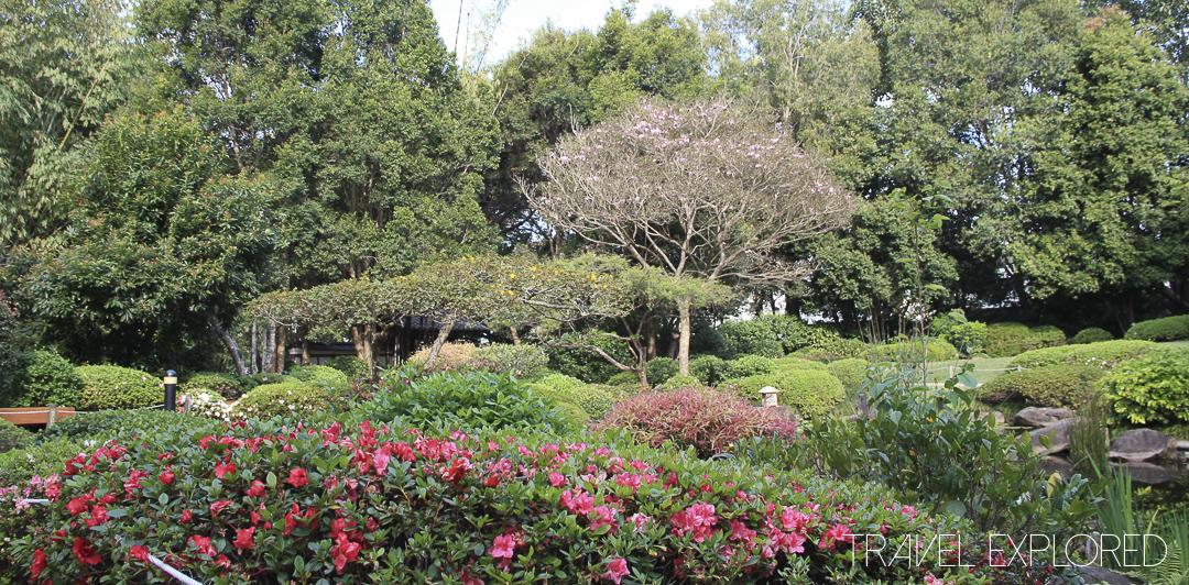 Brisbane Mount coot-tha Botanic Gardens