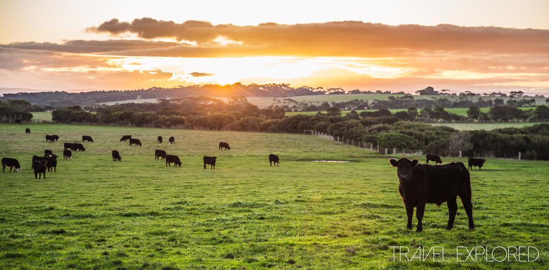 Sunset - Phillip Island, 21 June 2014