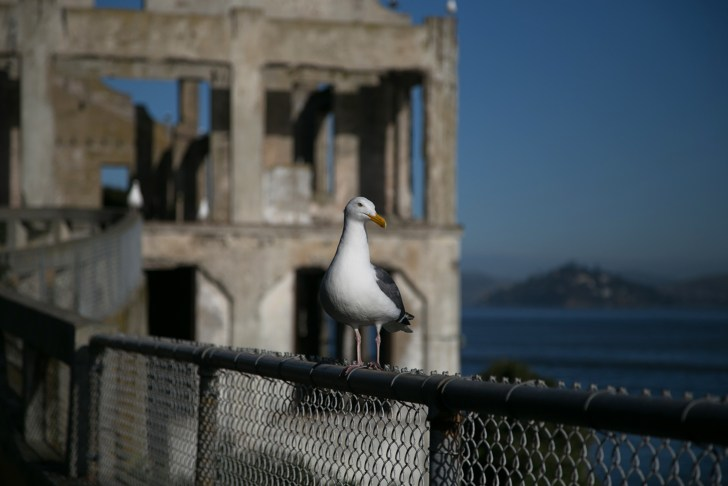 Is Alcatraz worth a visit? All you need to know when planning a trip to Alcatraz - Travel for a Living