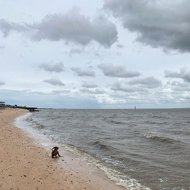 Dog Friendly Beaches in England - Travel for a Living