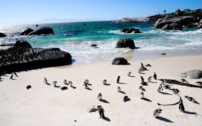 A Photo Essay: Boulders Beach in Simon's Town, South Africa