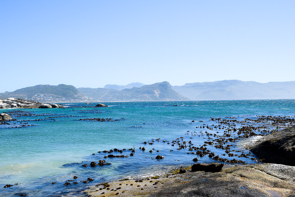 beautiful water at boulders beach