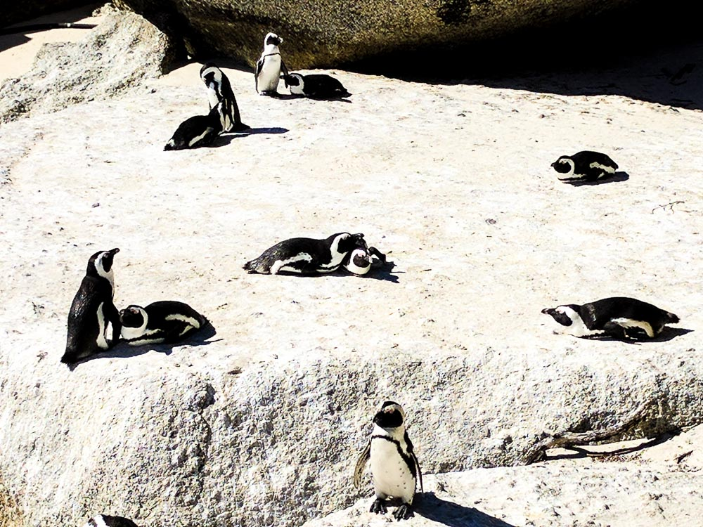 penguin friendship goals