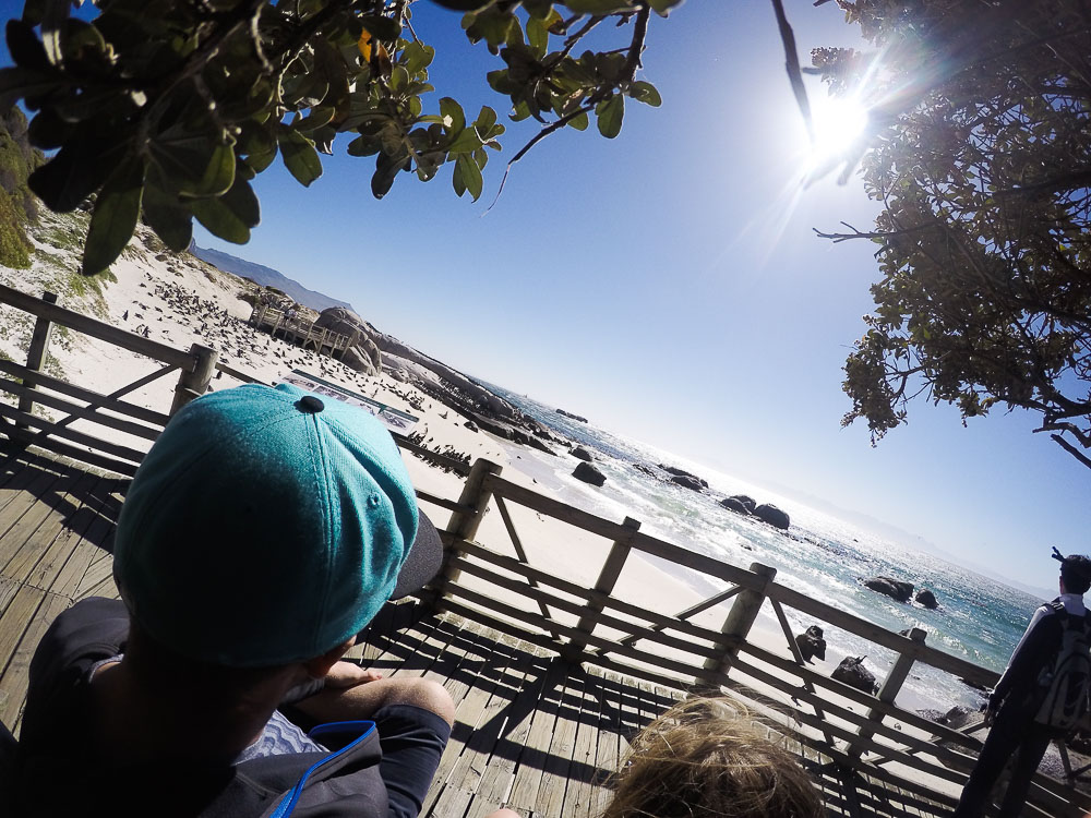 sitting on bench at Boulders Beach