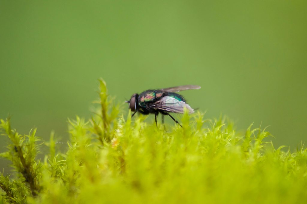 A close image of a colourful fly on a plant