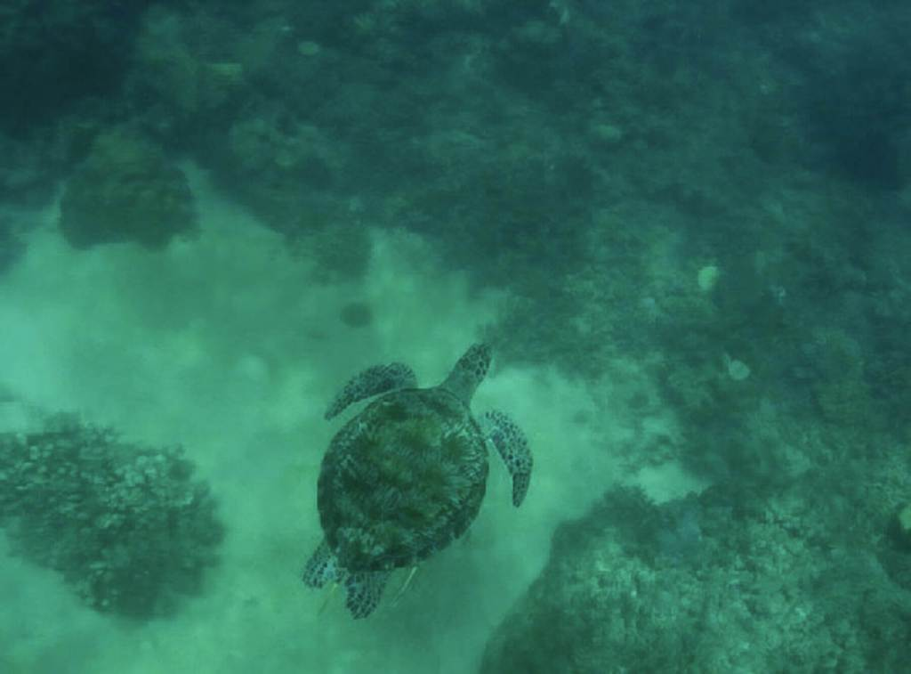 Sea Turtle swimming along the ocean floor
