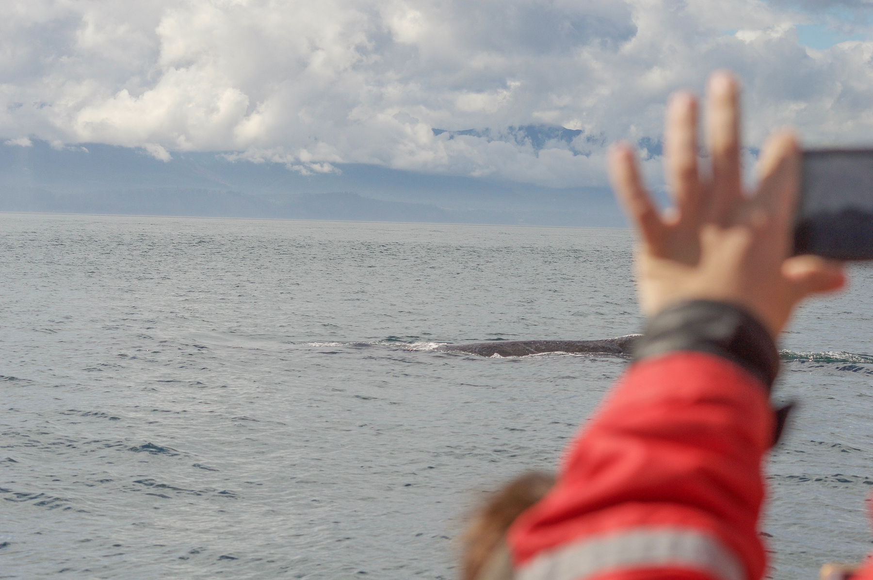 Humpback whale very close to Boat
