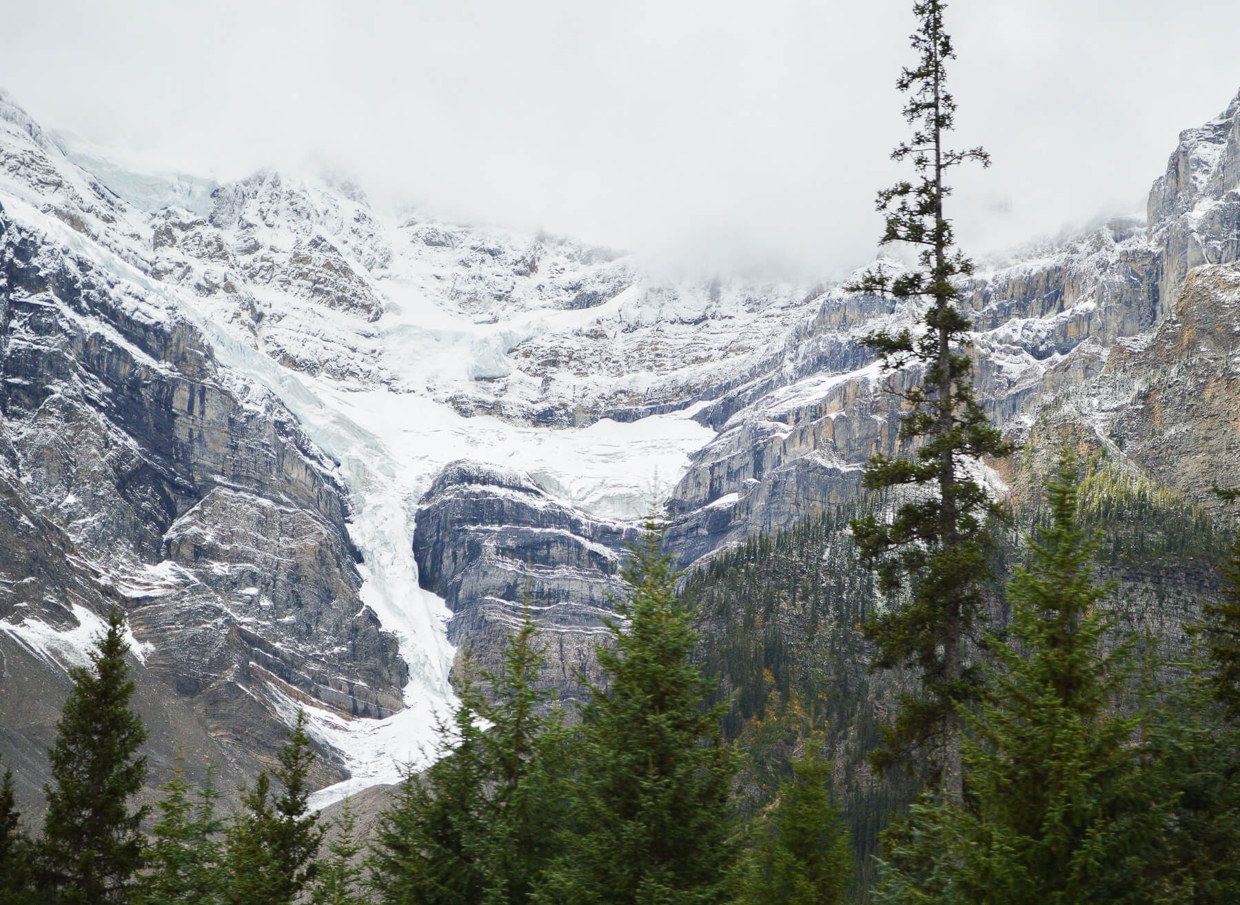 Pine trees in front of glacier on Rocky Mountain