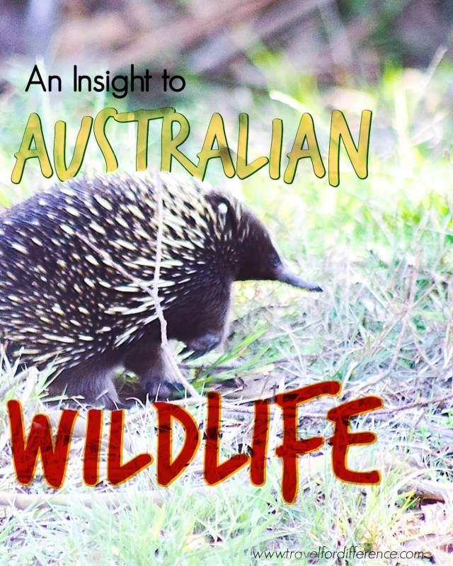 An Insight to Australian Wildlife