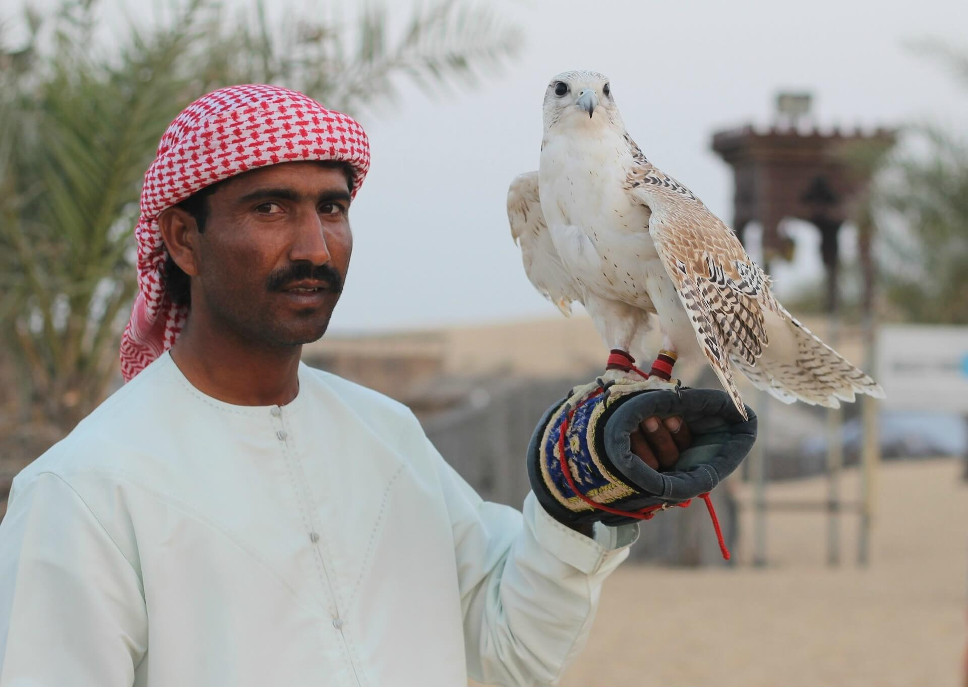 Muslim man in red head scarf, holding Falcon on his arm