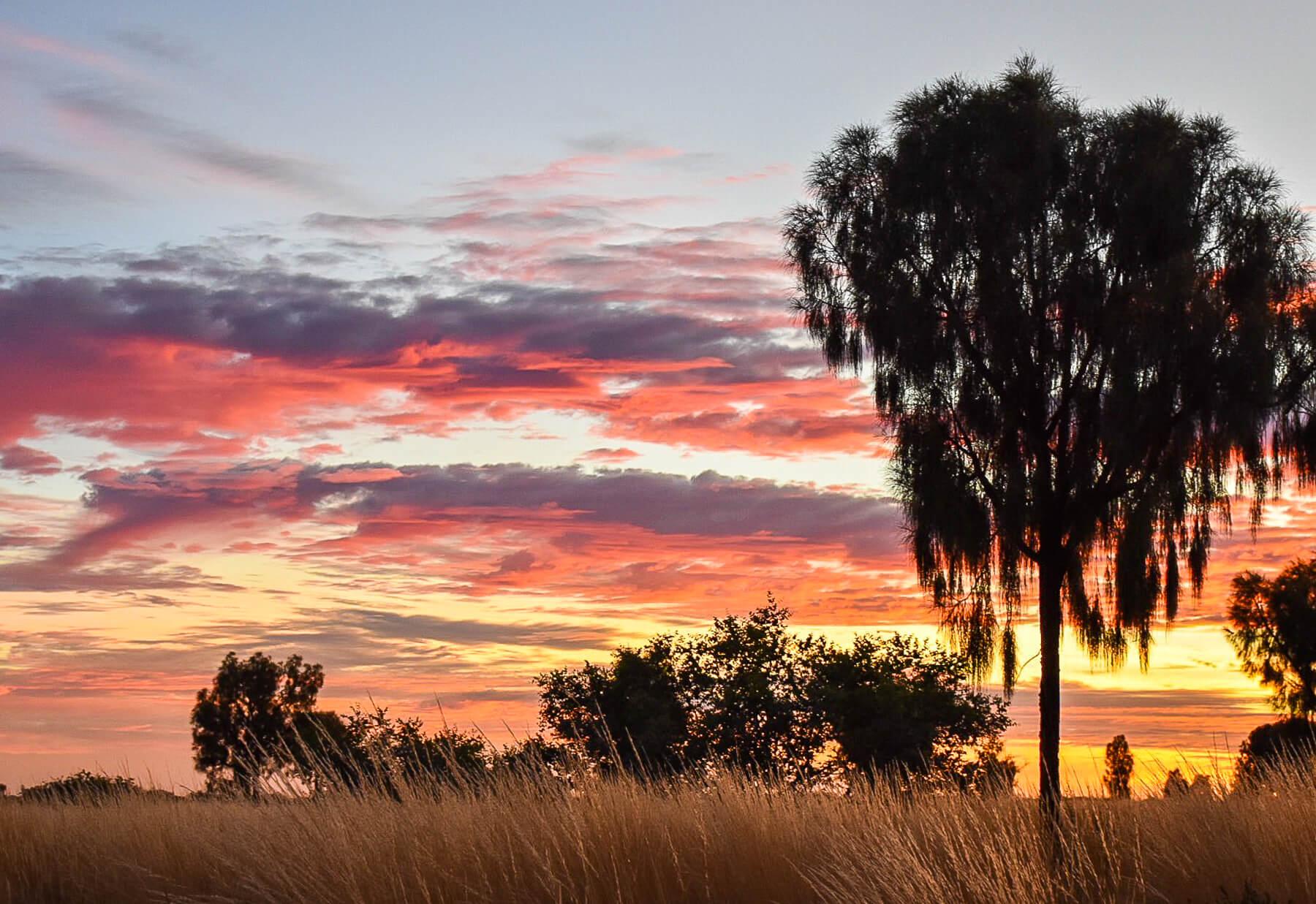 Grassy plains and Australian trees below a vibrant sunset