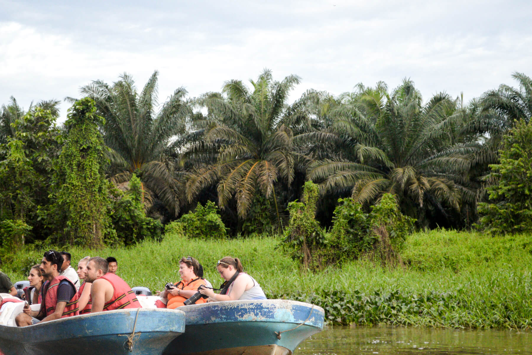 2 boats filled with tourists on Kinabatangan River and Palm Oil Trees in the background