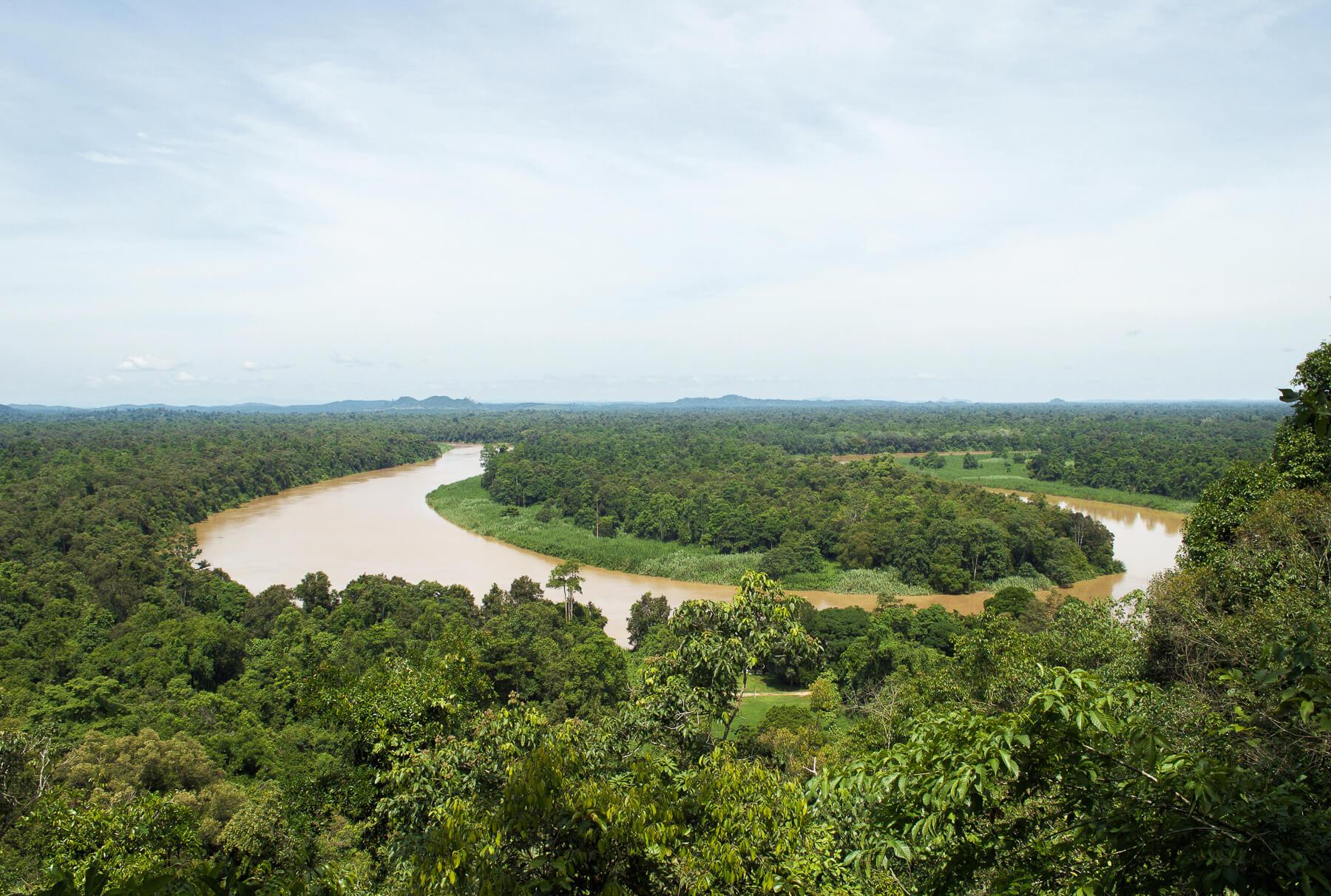 Overlooking Kinabatangan River from tree top lookout